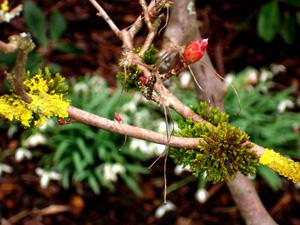 magnolie_moos1.jpg